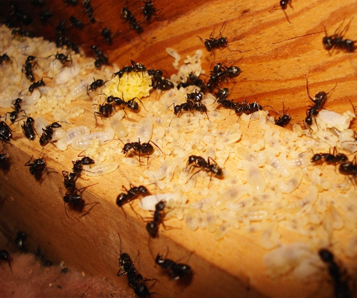 Ant Control Treatments